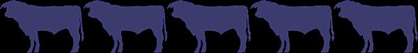 5 bulls
