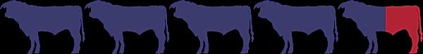 4 1/2 bulls