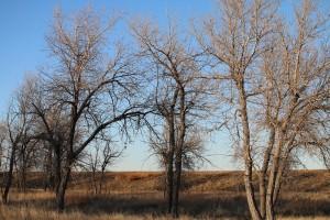 Richmil Ranch Open Space